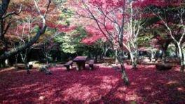 天城(昭和の森会館周辺)の紅葉