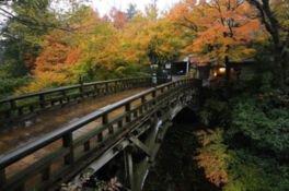 こおろぎ橋を彩る赤黄色のモミジ