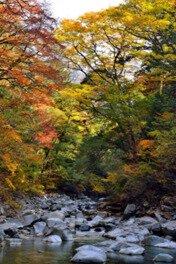 国民宿舎「面河」周辺の紅葉