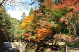 寂地峡の紅葉