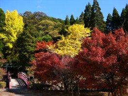 冠岳の紅葉