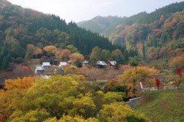 陽目渓谷の紅葉