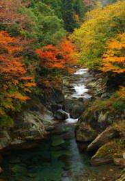 富郷渓谷の紅葉