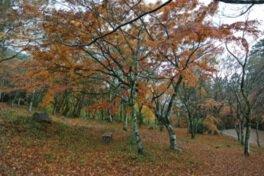 大洲・稲荷山公園の紅葉