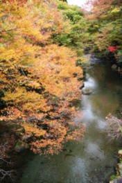五ヶ瀬渓谷の紅葉