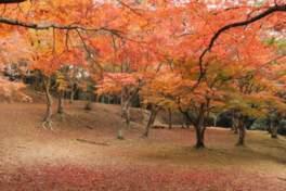 麓城跡の紅葉