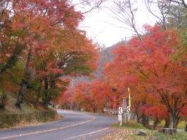 奥矢作湖の紅葉