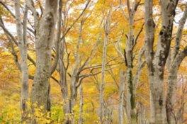 なべくら高原・森の家の紅葉