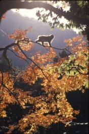 高崎山自然動物園の紅葉