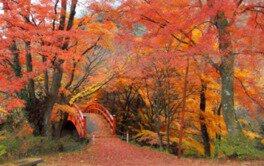矢祭山の紅葉