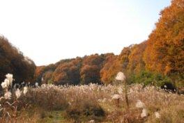 野山北・六道山公園の紅葉