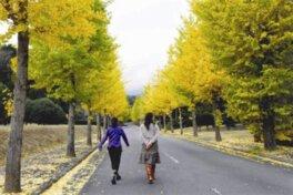 駿河平大通りの紅葉