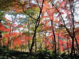国立科学博物館附属自然教育園の紅葉