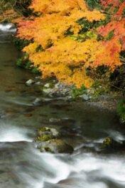 桐生川上流の紅葉