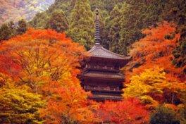 高源寺の紅葉
