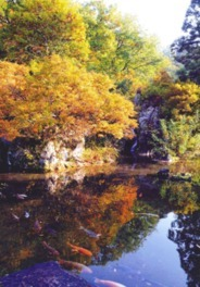 銀山温泉の紅葉