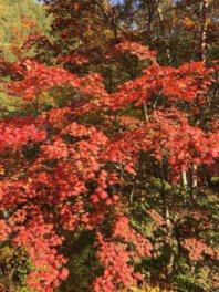 山王峠の紅葉