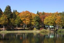 野沢温泉上ノ平高原の紅葉