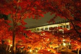 京都府立関西文化学術研究都市記念公園(けいはんな記念公園)の紅葉