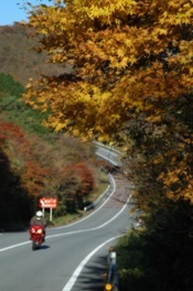 アネスト岩田ターンパイク箱根の紅葉