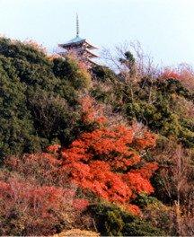 香貫山の紅葉
