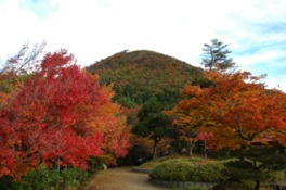 国上山の紅葉