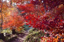 千葉山ハイキングコースの紅葉