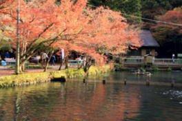 醒井養鱒場の紅葉