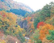 【紅葉・見頃】面白山紅葉川渓谷