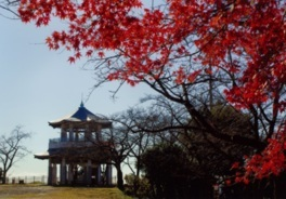 弘法山公園の紅葉