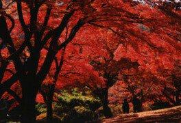 花と歴史の郷 蛇の鼻の紅葉