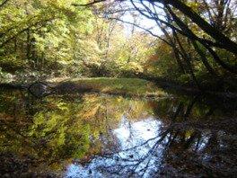 乙和池の紅葉
