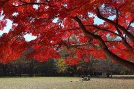 砧公園の紅葉