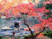 【紅葉・見頃】旧古河庭園