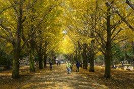 光が丘公園の紅葉