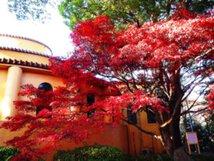 【紅葉・見頃】桜ヶ丘公園