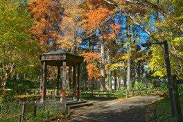 林試の森公園の紅葉