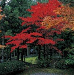 身延山西谷の紅葉