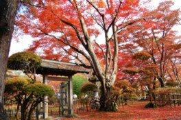 もみじ園の紅葉