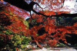 奇絶峡の紅葉