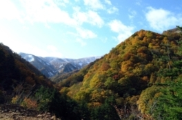 御所山の紅葉