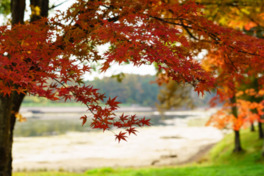 飯綱高原の紅葉