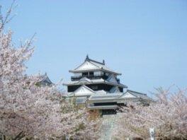 松山城(城山公園)の桜