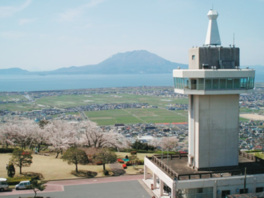 城山公園の桜(鹿児島県)