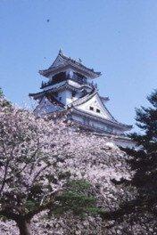 高知公園の桜