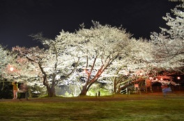 永楽ダム及びダム周辺の桜