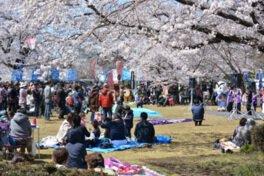 城跡歴史公園の桜