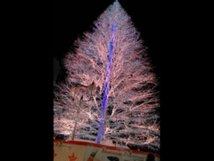 高知市中央公園