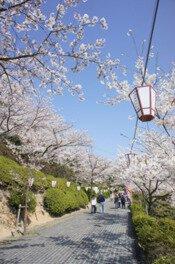 尾道市千光寺公園の桜