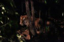 よこはま夜の動物園2017 ナイトズーラシア